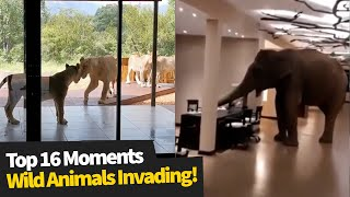 Top 16 Wild Animals Invading Homes & Businesses | Wild Animal Encounters