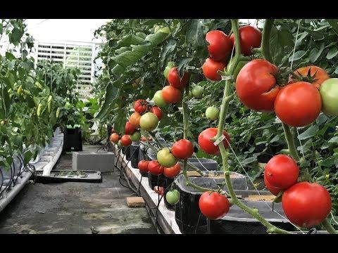June Greenhouse and Garden Update