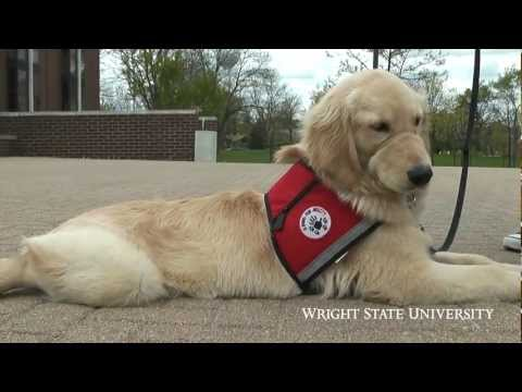 Service Dog-Training Program