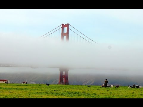 A journey from Alameda to Golden Gate Bridge