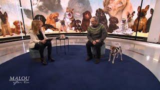 """Hundprofessorn om hundars olika faser av livet - """"Alla hundar är individer"""" - Malou Efter tio (TV4)"""