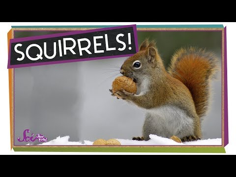 Why Do Squirrels Dig?