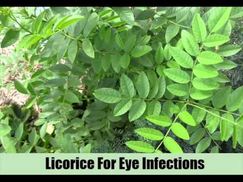 6 Amazing Herbal Remedies For Eye Infections