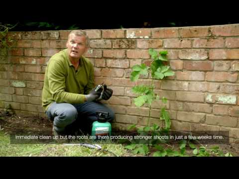 How to treat brambles by a wall with Roundup weedkiller spray | Video
