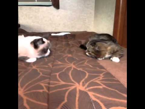 Grumpy Cat and Lil BUB Meeting for the First Time