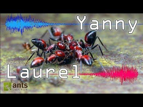 ANTS: Do You Hear