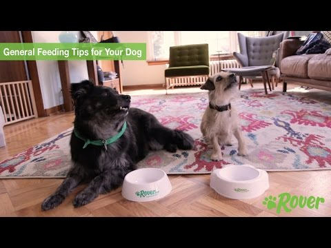 General Feeding Tips for Your Dog - Rover.com Quick Tips