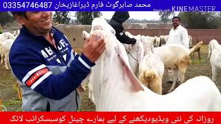 15 minutes) Goat Farm In Lahore Video - PlayKindle org