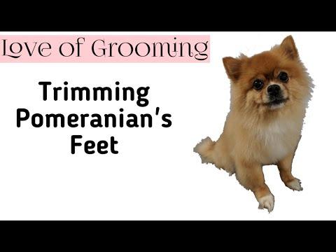 How to Trim Pomeranian's Feet