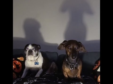 Dogs Watching Scary Horror Movies - Cute