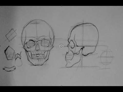 Drawing Human Anatomy & Head Proportions   How to Draw a Reaslistic Skull Step by Step