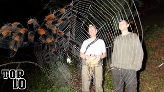 Top 10 Biggest Spiders In The World