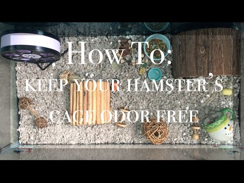 How To Keep Your Hamster's Cage Odor-Free