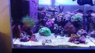 Mini Reef Update # 14 New Stag Horn Coral