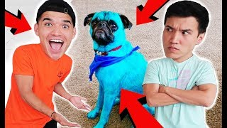 Download I DYED MY BROTHERS PUPPY BLUE! *not clickbait* Video
