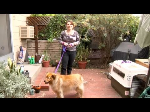 How to Keep a Dog From Peeing on Your Flowers : How to Domesticate Your Dog