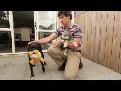 Stop Dog Barking Testimonial