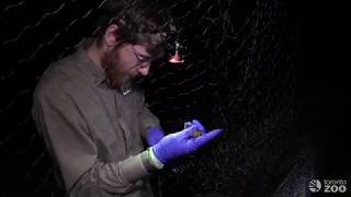 In The Field: Toronto Zoo Bat Diaries