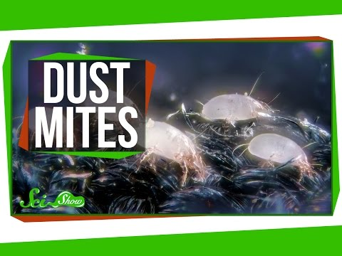 3 Things You May Not Want to Know About Dust Mites