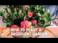 Succulent Container Gardens: Tips and Tricks