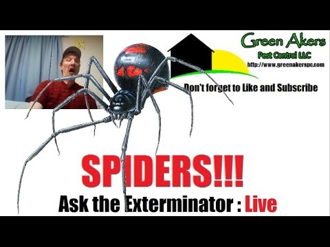 How to identify a poisonous spider | Black Widow | Brown Recluse | LIVE STREAM