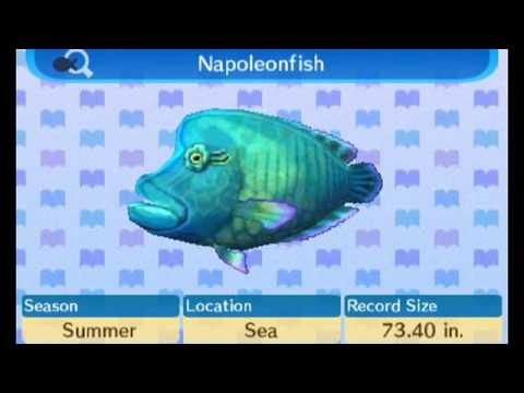Animal Crossing New Leaf - 100% Fish Encyclopedia Complete