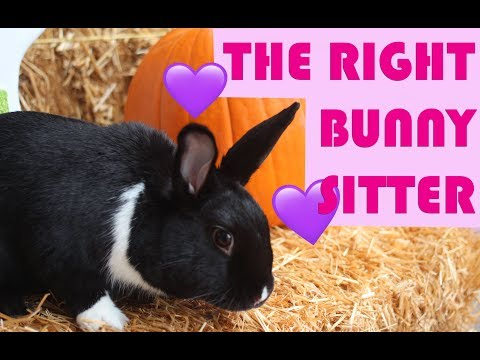 How To Find The Right Bunny Sitter
