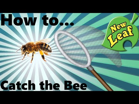 How To: Catch the Bee in Animal Crossing New Leaf