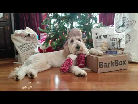 Goldendoodle Service Dog Playing Mannequin for His Barkbox!