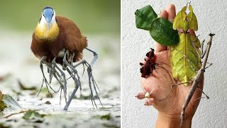 10 Rarest Animals with Superpowers