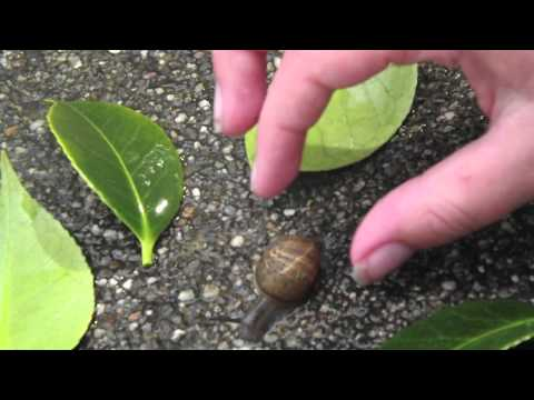 How To Train Your Snail