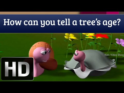 How to Determine the Age of a Tree? - General Knowledge for Kids