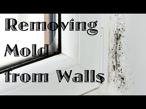 Removing Mold from Walls