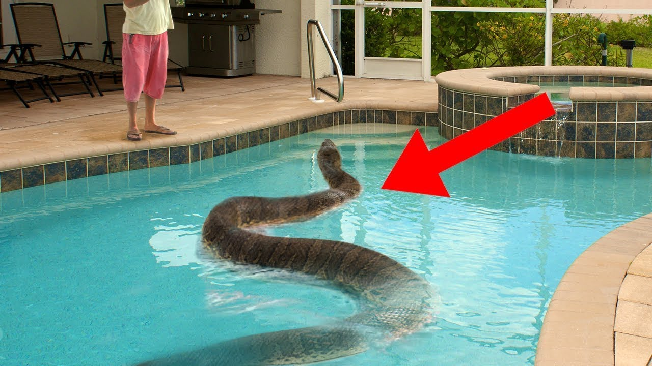 Strangest Things Found In Swimming Pools