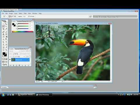 How to crop a picture in to Adobe Photoshop CS2