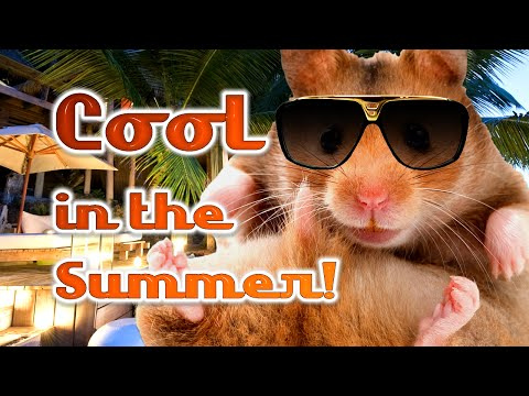 How To Keep A Hamster Cool In Warm Weather