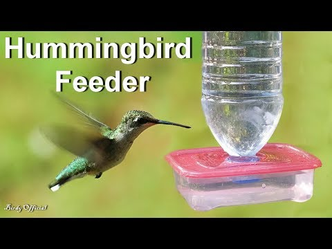 Hummingbird Feeder - How To Make A Hummingbird Feeder