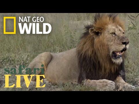 Safari Live - Day 149 | Nat Geo Wild