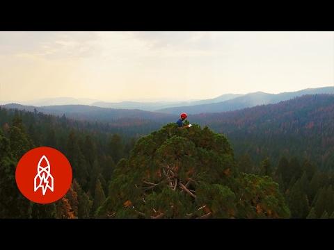 Stress Testing Giant Sequoias | That's Amazing