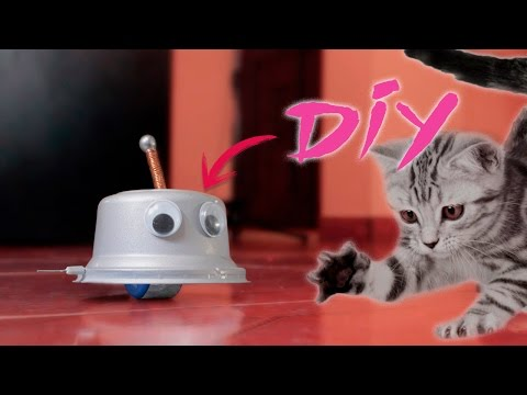 DIY Cat Toy - How to Make a Cat Toy