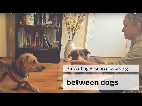 Preventing Resource Guarding Between Dogs