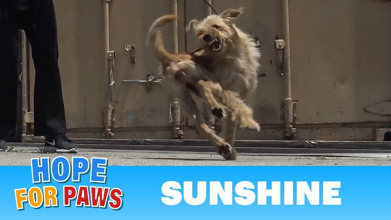 Oh wow, this rescue turned to be INTENSE as the dog was fighting for her life!!!