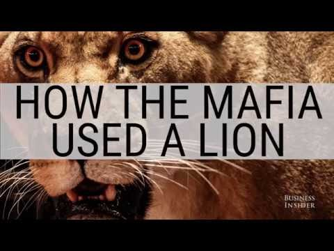 How The Mafia Used A Lion To Intimidate People