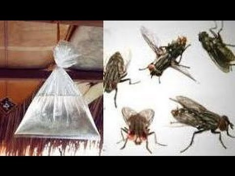 14 Amazing Tricks To Keep Flies Out of Your Home and Garden