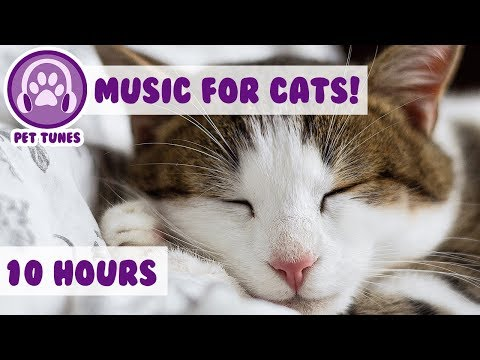 10 Hours! Cat Therapy to Help your Anxious and Depressed Cat! Relax My Cat! Make Your Kitten Sleep!