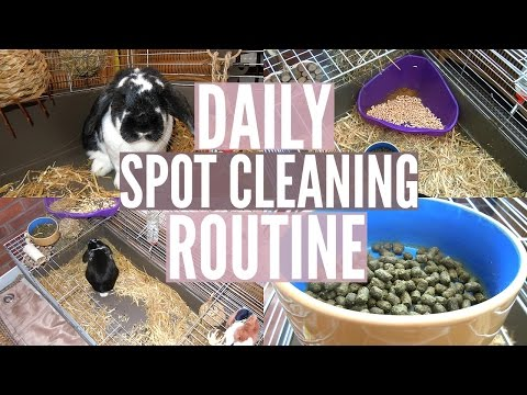 DAILY RABBIT SPOT CLEANING ROUTINE | RosieBunneh