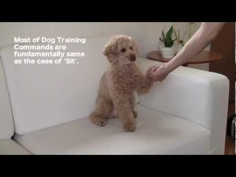 Dog Training 4