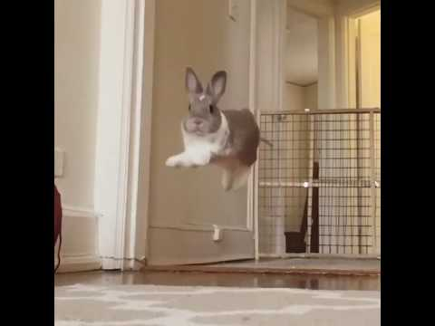 Rabbit jump in slow-motion