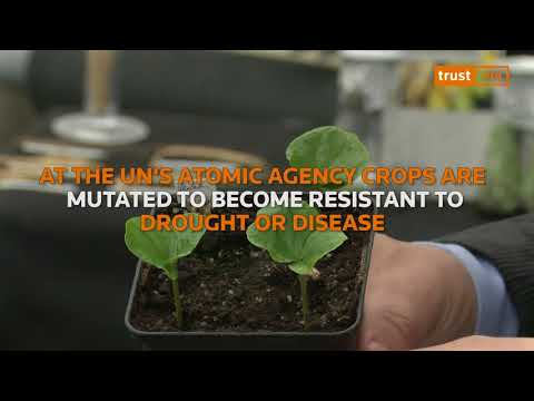 Rebooting Food - Science Bites: Mutating crops