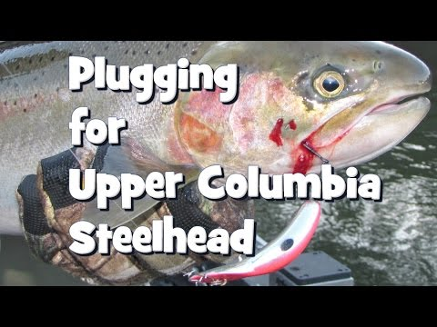 Plugging for Upper Columbia Steelhead